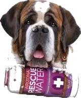 rescue_dog